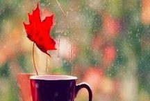 Осенние съемки