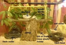 Crabitat Ideas / Ideas for our hermit crab home. / by Kylie Williams