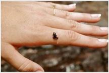 Najmenšie zvieratká na svete