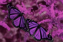 Butterflies, butterflies, butterflies / Beautiful flying creatures / by Betty Avant