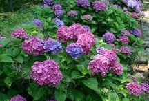 kert, és virágok