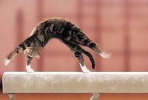 Gymnastics for Alva