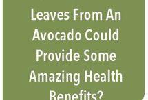 Avocado Leaves tea