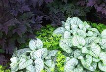 Rośliny do cienia