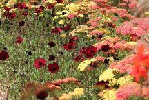 trädgård färgskala
