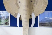 Zvířata - AFRIKA