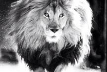 Iron lion zion / by Corrie Albritton