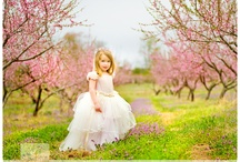 Cherry Blossoms / by Heather Holmes