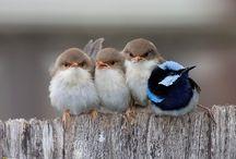 Birds/Ptaki