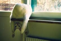 kitties / by Rebekah Nathan