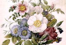 Z Květiny