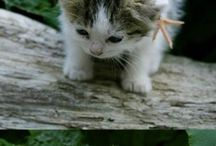 BABY KITTEN WITH BABY DUCK - AWE!!!