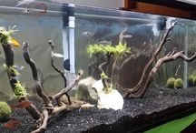 Planted Aquarium Design 2014 /  Planted tank.