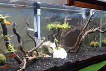 Planted AquariumDesign 2014 /  Planted tank.