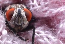 orugas caterpillars, escarabajos beetles, langostas, moscas, mariposas y hormigas. / by Victor Goldfeld