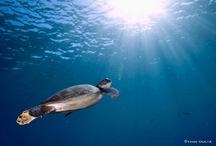 Underwater / by John Erwin