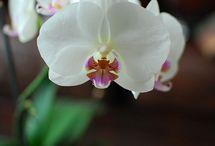Orchids  & Flowers!!!