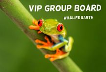 VIP Group Board / The all new Very Important People Group Board is specially created for fans, amazing people, and my great followers! - Feel free to pin anything you like! Thanks.