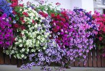 balconi fioriti,finestre  ecc...