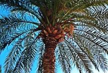 Palm trees and flamingos  :)  / by Morgan Johnson