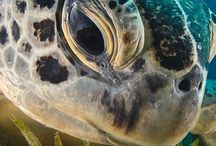 TIERE: Turtle