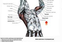 Exercises upper body