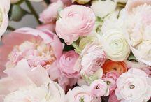 Kwiatki, bratki i stokrotki