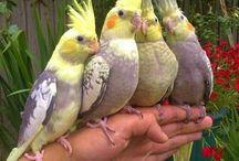 Animales hermososLC
