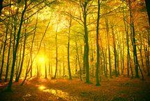 nature / by Litton Greenspan