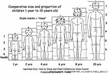 proportions of human