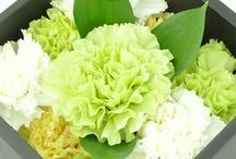 Flower & Gardening