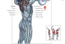 En forma / Musculacion
