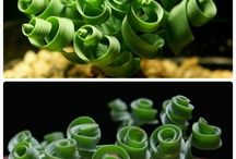 Curly succulents