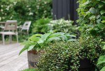 Ogród & balkon