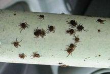 от клещей и комаров