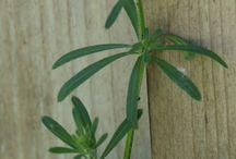 Planten en kruiden