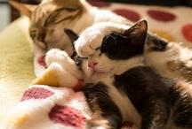 Kittens Cuddling! / Adorable kittens doing adorable things.