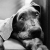 Pet Photography / by Betty