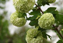 Avril - Des fleurs, une saison