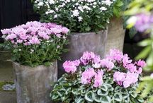 jardiniere d'automne