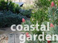 Steves garden ideas