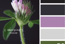Color / by Donna Baratta