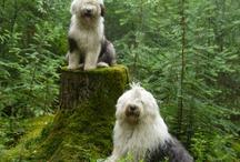 Kutyák (Dogs)