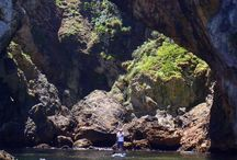 Poor Knights Islands / The Poor Knights Islands Marine Reserve, off the Tutukaka Coast, NZ.