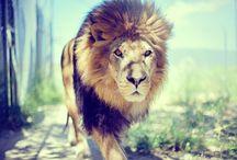 lions =)