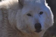 Wolf Learning for Kids / News and Information about Learning and Advocacy for Kids