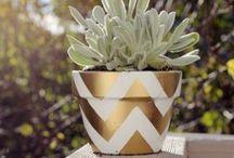 pot plant decoration