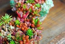 красивые композиции кактусов