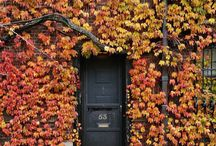 Autumn  / Wonderful colours