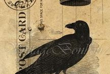 ..RAVEN.. / Mostly ravens...with a splash of crow. / by Tina Pruitt